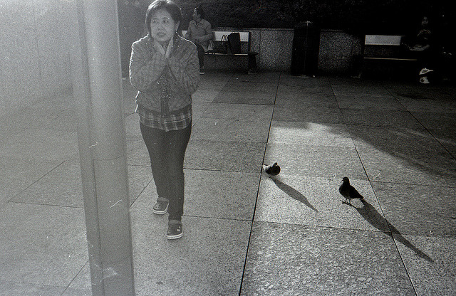 Pigeons Near on Flickr. Pentax PC35AF Kodak TMAX 100Photography BlogTumblr BlogSociety 6