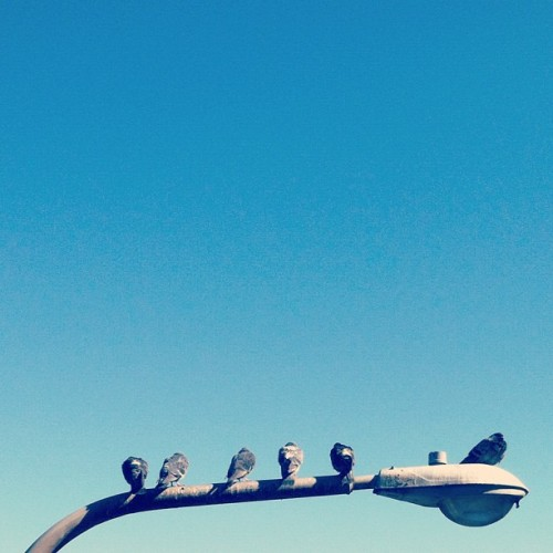 Today was pretty. #sanfrancisco #pigeons