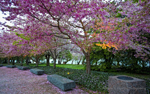 Spring at the FDR Memorial - Washington DC (by ann7106)