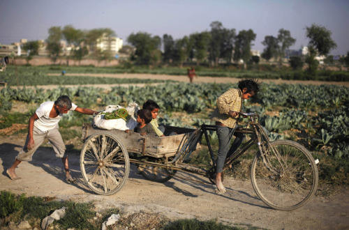 politics-war:  A young Indian girl pedals a rickshaw loaded with vegetables as her father pushes it on the outskirts of New Delhi, India, on March 7, 2013. Photo: Altaf Qadri