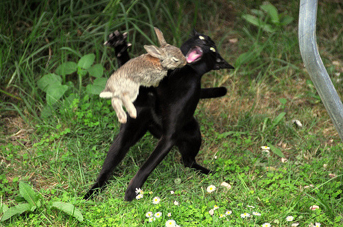 Bunny, use headbutt!