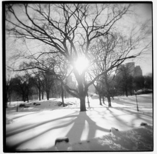 frophoto:  Old film scan from last year's snowstorm …