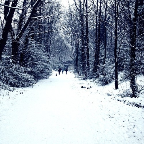 #snow #london #winter #highgate  (at Parkland Walk (Crouch End to Highgate Section))