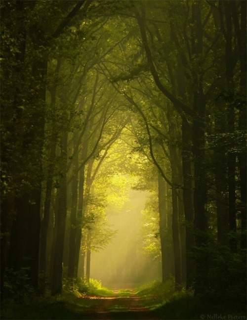 Tree Cathedral, The Netherlands photo via dreamer