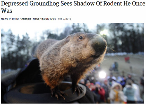 theonion:  Depressed Groundhog Sees Shadow Of Rodent He Once Was: Full Story