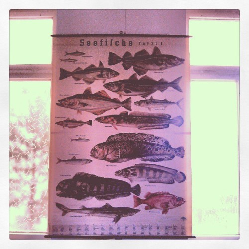 beautiful vintage fish school map // #schifffahrtsmuseum #rostock #schoolmap #vintagemap #fish #nautical #vintagedesign #zoological #fishes #wallchart #vintagechart