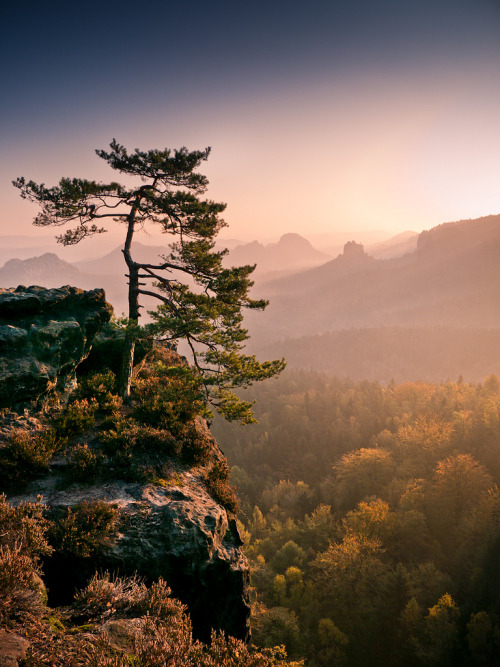 definitelydope:  Morning Light (by andywon)