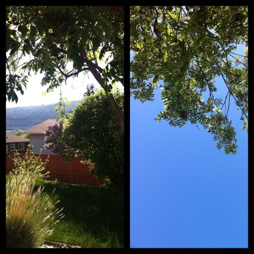 Not a cloud in the sky on this beautiful day! Hello Okanagan summer, I've missed you :). Also sorry I have been MIA everyone. I have just been finishing up school and moving so things have been a little crazy. I promise I will be back soon!