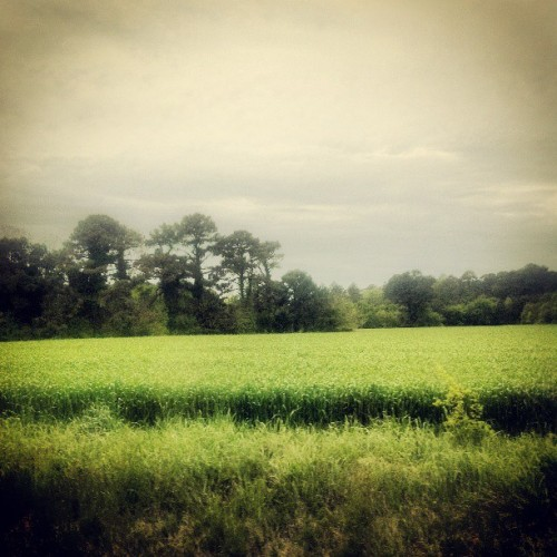 #vibrant #green #fields and #statuesque #trees #beneath a #canopy of a #puffy #cloud #blanket