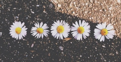 love photography pretty girl cute fashion Cool beautiful white hippie hipster vintage boho indie Grunge flowers nature urban bohemian pale vertical daisies