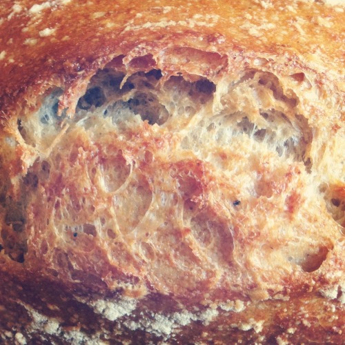 bakery47:  White sourdough oven burst