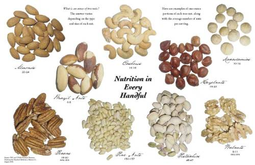 One ounce servings of different nuts. Nutrition Information for 1 ounce of Nuts Almonds (20 – 24 nuts): 160 calories, 14 grams fat, 6 grams protein Brazil Nuts (6 – 8 nuts): 190 calories, 19 grams fat, 4 grams protein Cashews (16 – 18 nuts): 160 calories, 14 grams fat, 4 grams protein Hazelnuts (18 – 20 nuts): 180 calories, 17 grams fat, 4 grams protein Macadamia (10 – 12 nuts): 200 calories, 22 grams fat, 2 grams protein Peanuts (28 nuts): 170 calories, 14 grams fat, 7 grams protein Pecans (18 – 20 halves): 200 calories, 20 grams fat, 3 grams protein Pine Nuts (150 – 157 nuts): 160 calories, 14 grams fat, 7 grams protein Pistachios (45 – 47 nuts): 160 calories, 13 grams fat, 6 grams protein Walnuts (14 halves): 190 calories, 18 grams fat, 4 grams protein Source, Source