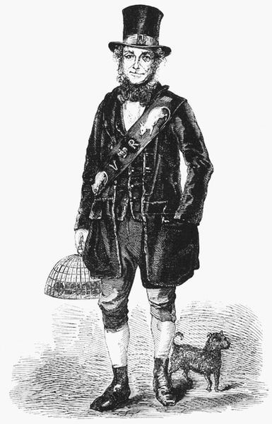 "Jack Black, Her Majesty's Rat-catcher By the mid-19th century it was well understood that rats carried diseases, however, sanitation within large cities still left a lot to be desired and rats infested sewers and homes alike. As a result, rat-catching could prove a rather lucrative profession. Rat-catchers would capture rats by hand, often with specially-bred vermin terriers, or traps, and payment would be high for catching and selling rats to breeders. Most famous amongst these rat-catchers was Jack Black: rat-catcher and mole destroyer by appointment to Her Majesty Queen Victoria. Black is best know through his interview in Henry Mayhew's London Labour and the London Poor, Vol. 3, where he tells of his work and experiences. Black cut a striking figure in his self-made ""uniform"" of scarlet topcoat, waistcoat, and breeches, with a huge leather belt inset with cast-iron rats. He was reported to be ""the most fearless handler of rats of any man living"", on one occasion, at a public display, placing half a dozen rats taken directly from the sewers inside his shirt while delivering a sales pitch on the rapid effects of rat poison. His face and hands were covered in scars from bites and by his own account there were numerous occasions on which he had almost died from infection following being bitten. When he caught any unusually coloured rats, he bred them, to establish new colour varieties. He would sell his home-bred domesticated coloured rats as pets, mainly, as Black observed, ""to well-bred young ladies to keep in squirrel cages"". Beatrix Potter is believed to have been one of his customers. The more sophisticated ladies of court kept their rats in dainty gilded cages, and even Queen Victoria herself kept a rat or two. Black also supplied live rats for rat-baiting in pits, a popular mid-Victorian pastime.  [Sources: Wikipedia (Jack Black) 