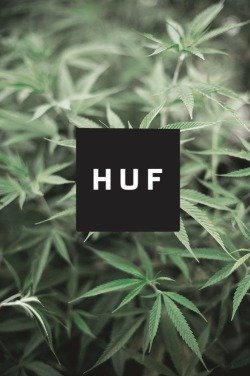 w0lf-sunset:  huf weed