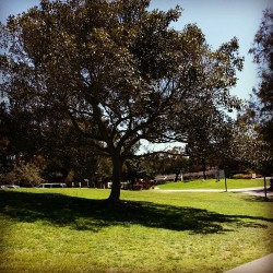 Spring quarter is definitely my favorite time of year around UCSD