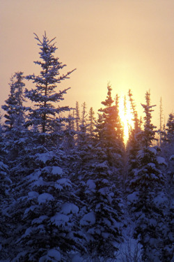 tearingdowndoors:  January Sunrise | JLS Photography - Alaska