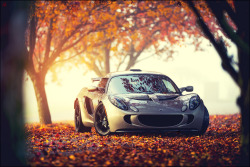 carpr0n:  Lone squirrel Starring: Lotus Exige (by VisualEchos)