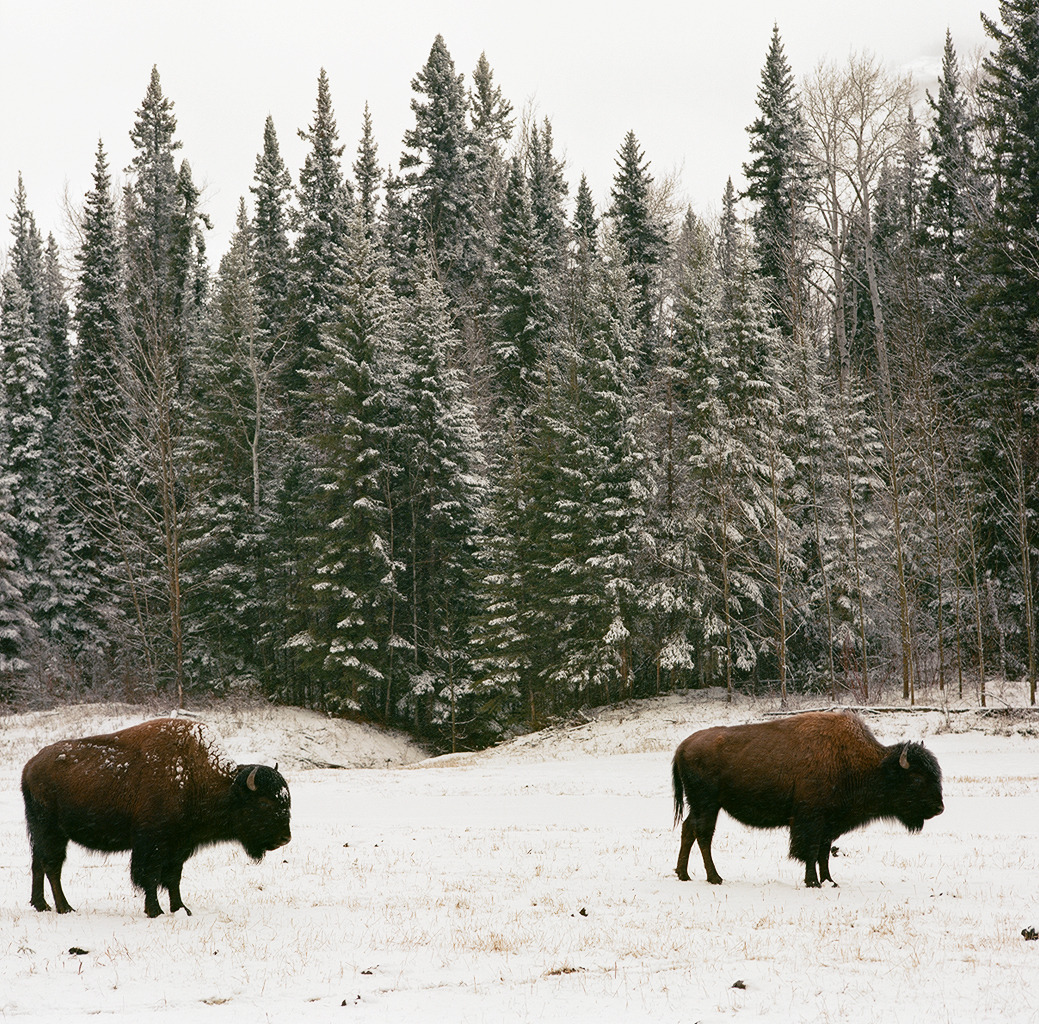Buffalo British Columbia, Canada | 2013 I just posted the first group of film photos from my road trip to Alaska over on Full Frame Collective, covering the first 5 days of our journey, from San Francisco, CA to Liard Hot Springs. Click through to check em out.
