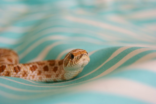 "thisisasnake:  Zubon says ""Yay winter break!"""