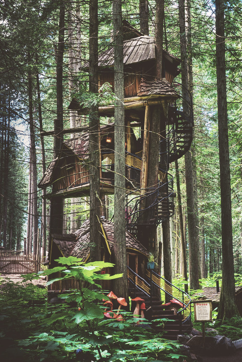 funnywildlife:  I love me a tree house too!!