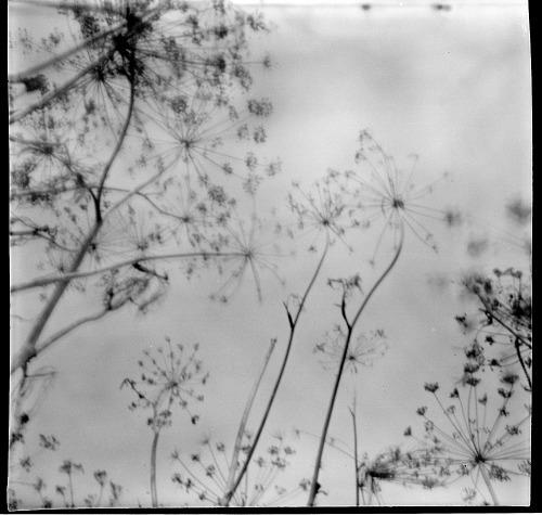 radekrogus Black and White photography photographers on tumblr pinhole camera obscura natural
