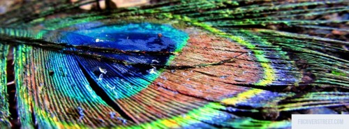 Peacock Feather Facebook Cover