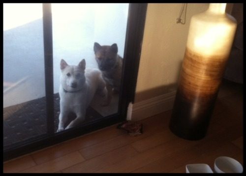 Kirin & Kona: Can we come back in please? Kirin & Kona's mom & dad: No way. We're enjoying the peace and quiet! :)