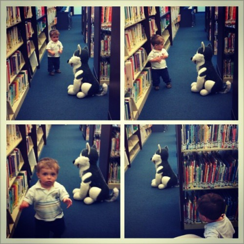 At the library, Jackson is walking away from me down this aisle when he suddenly turns around and freezes, staring down an aisle.  I walk over and see a stuffed dog there.  So I bring it out into the aisle with Jackson and return to where I was standing.  Upper left is Jackson frozen in fear.  Upper right is Jackson slowly making his way past the fake dog, a wary eye always on him, hands clutched to his chest.  Bottom right is Jackson busting out a full-on toddler run.  Bottom right is Jackson peeking at the beast from a safe distance.  What you don't see is me peeing my pants.  Ahem.  He's a bit afraid of dogs.  #jacksonchord #TheMonsterAtTheLibrary