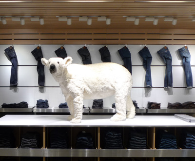 Polar Bear.  Calvin Klein Jeans, Seoul, South Korea.  Holiday 2012.