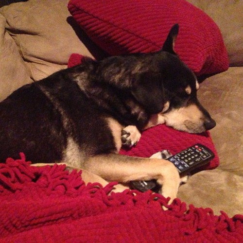 charlestrippy:  I REALLY would like to change the channel but I don't want to disturb this…