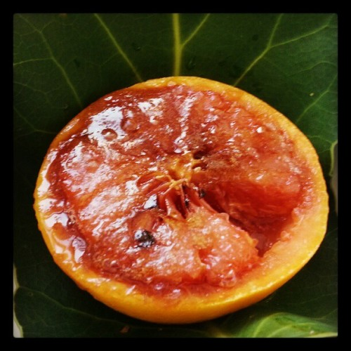 Grilled grapefruit #NowIKnow / on Instagram http://instagr.am/p/Wdgf5CMHPc/