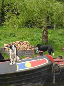 Dogs on Canal Boats,  Brewood, Staffordshire, England All Original Photography by http://vwcampervan-aldridge.tumblr.com