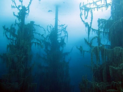 atlasobscura:  odditiesoflife:  The Amazing Underwater Forest of Lake Kaindy What makes Lake Kaindy truly remarkable is that it contains an underwater forest. Visible on the lakes surface are the tall, dried-out tops of submerged Spruce trees that rise above the water's surface like the masts of sunken ships. They are the only sign of the amazing frozen forest below the water's surface. The water is so cold (even in summer the temperature does not exceed 6 degrees) that the pine needles remain on the trees, even after a hundred years of being submerged. During the winter, the lake freezes and becomes a popular spot for ice diving. The lake is 400 meters long and is located in Kazakhstan's portion of the Tian Shan Mountains, about 129 km from the city of Almaty. The lake was created after an earthquake in 1911 triggered a large landslide blocking the gorge and forming a natural dam.  Even more on Kaindy Lake…