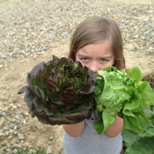 She is really happier than her eyes say. Fresh lettuce for supper!  Market opens June 1st.  (at The Farm)