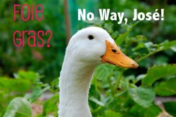onegreenplanet:  8 Good Reasons to NOT Eat Foie Gras