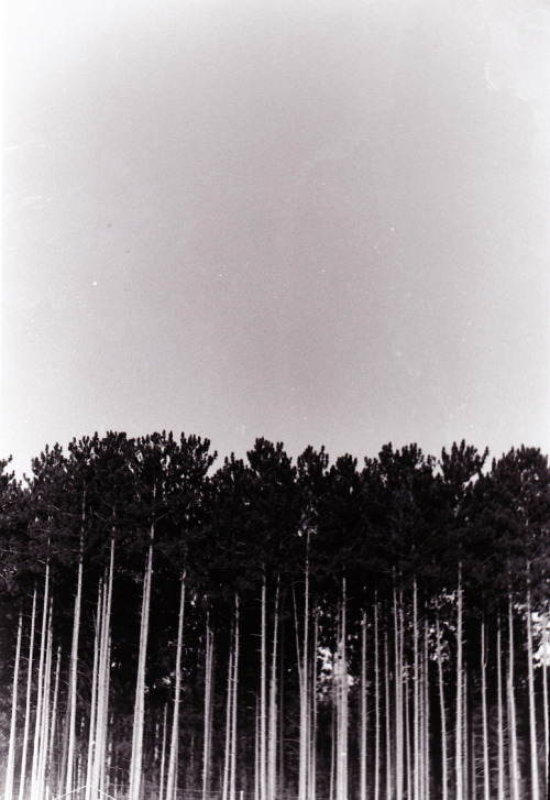 "hitrecord:  ""Trees"" Photo by Kaidan Whitehouse"