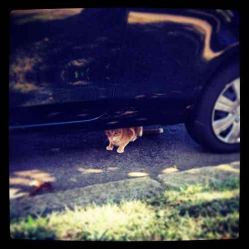 I hate hate hate when Norman hides under the car. #cat #cats #mycat #mycatishuman #mycatisthebest #orangecat #redcat #gingercat #ginger #gingercatsarethebest #kitty #kawaii #cute #ilovemycat #bloodyloveyou #catlovers #weeklyfluff