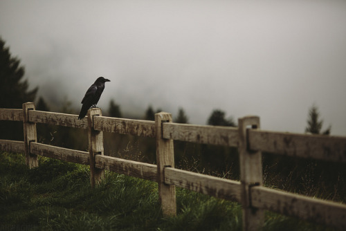 rain-storms:   Raven [03.31.13] by Andrew H Wagner | AHWagner Photo on Flickr.