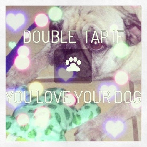 #cute #dogs #pugs #woof #love #loveit  #adorable #iphonesia #instalike #jakethedog #smile #saturday #play #popular #happy #rain #rainyday