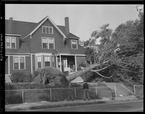 Damaged trees, Hurricane of 38 (by Boston Public Library) Leslie Jones