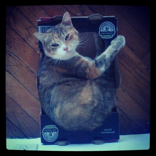 Hi my name is Ginger and I like sleeping in cardboard boxes #cat #cute #catgram #kitty #greeneyes #gingerkitty #catsinboxes