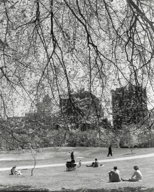 historicalgotham:  Central Park, 1940 by John Albock (via)