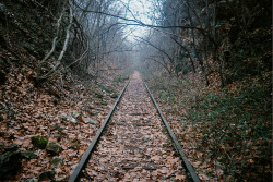 abandonedography:  Abandoned Railroad Tracks, Missouri by large barge