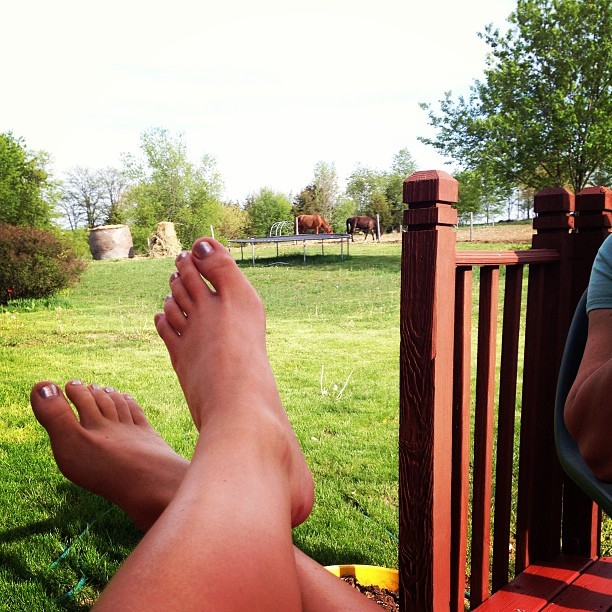 This is the life. #Happy #backyard #deck #horses #sunnyday #spring ☀☀👍