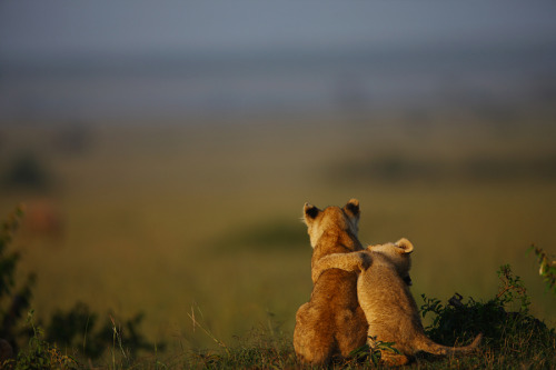 animalfunwithnature:  buddies by *serhatdemiroglu