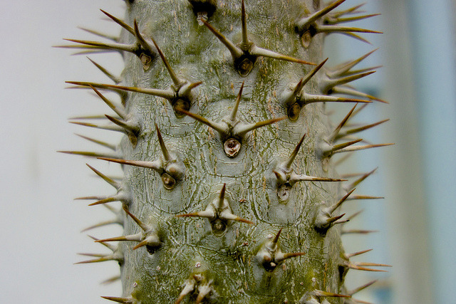 Bad Cactus on Flickr.