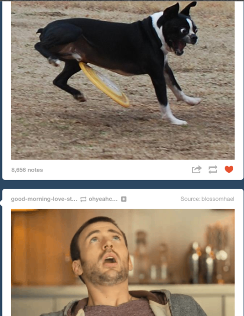 imamultifandommess:  I am allowed ONE STUPID SCREENSHOT OF MY DASH since it is hell week at school Have Chris Evans pitying a dog getting hit in the b