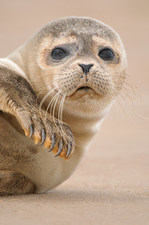 earthsfinest:  Look how cute I am…. by Edwin Kats