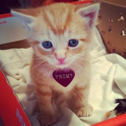 Prom? Screw that id marry him!