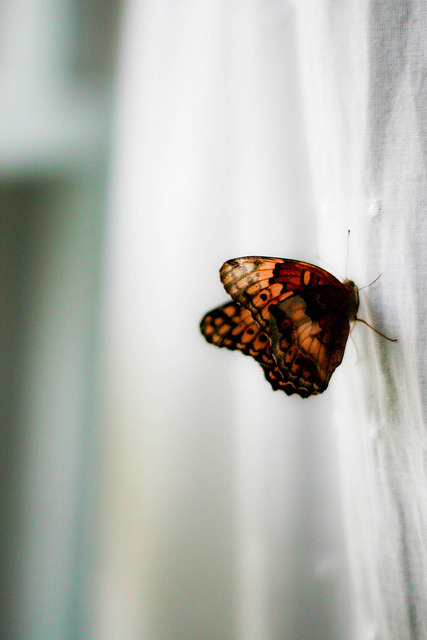 left-nut:  There's a Butterfly by ~Shona Leah on Flickr.